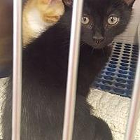 Adopt A Pet :: Mickey 1595 - Alva, OK