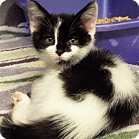 Adopt A Pet :: Squirt - Grants Pass, OR