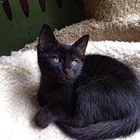 Adopt A Pet :: Ranger - Kennedale, TX