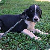 Adopt A Pet :: Christian - Newark, DE