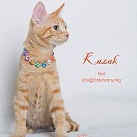 Adopt A Pet :: Kazak - Riverside, CA