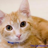 Adopt A Pet :: Simba - Parlier, CA