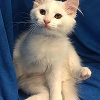 Adopt A Pet :: Fuji, Whitney, and Everest - Knoxville, TN