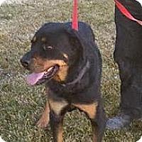 Adopt A Pet :: SAMSON - Lucerne Valley, CA