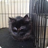 Adopt A Pet :: Rocky2 - Orillia, ON