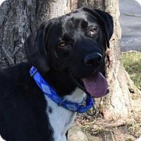 Adopt A Pet :: Fischer - Naugatuck, CT