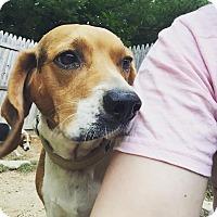Adopt A Pet :: Ahrim - Freeport, ME