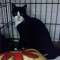 Adopt A Pet :: Twilight - Freeport, NY