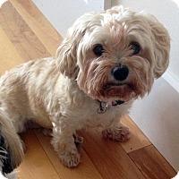Adopt A Pet :: Coco - Toronto, ON