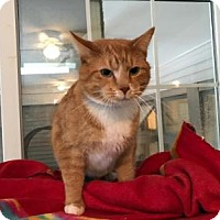 Adopt A Pet :: Cheeto - East Stroudsburg, PA
