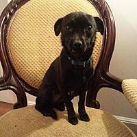 Adopt A Pet :: Luke - Gaithersburg, MD