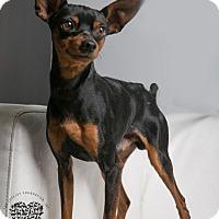 Adopt A Pet :: Pepe - Inglewood, CA