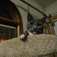 Adopt A Pet :: Axel - Land O Lakes, FL