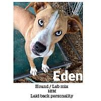 Adopt A Pet :: Eden - Burlington, VT