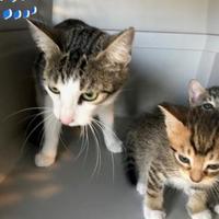 Adopt A Pet :: Darla - West Monroe, LA