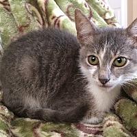 Adopt A Pet :: Sunga - Delray Beach, FL