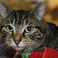 Adopt A Pet :: Tabby - Philadelphia, PA