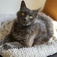 Adopt A Pet :: Captain - Oakland, CA
