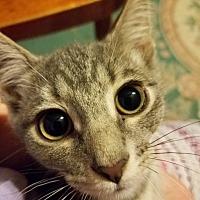 Adopt A Pet :: Lili - Stafford, VA