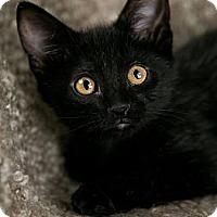 Adopt A Pet :: Maddox - Eagan, MN