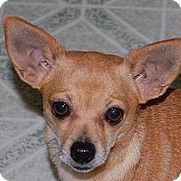 Adopt A Pet :: Pink - Marlton, NJ