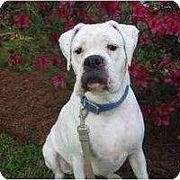 Adopt A Pet :: Zsa Zsa - Brunswick, GA