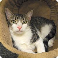 Adopt A Pet :: Jackson - The Colony, TX