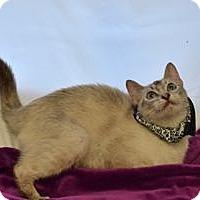 Adopt A Pet :: Katrina - Colorado Springs, CO