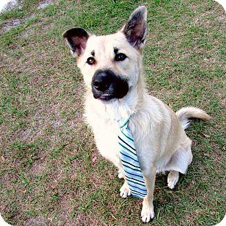 Shepherd (Unknown Type) Mix Dog for adoption in Umatilla, Florida - Billy