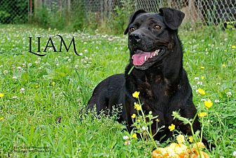 Terrier (Unknown Type, Medium) Mix Dog for adoption in Franklin, Tennessee - Liam