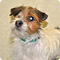 Adopt A Pet :: Punkin - Port Washington, NY