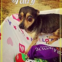 Adopt A Pet :: Fairy - Seaford, DE