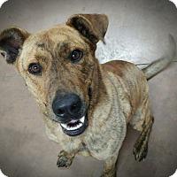 Adopt A Pet :: Finn - Wilmington, OH