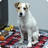 Adopt A Pet :: Jackie Boy in Houston, TX - Austin, TX