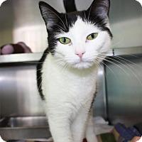 Adopt A Pet :: Gretchen - Richmond, VA