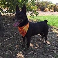 Adopt A Pet :: BRADY - Elk Grove, CA
