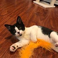 Adopt A Pet :: Red - Bensalem, PA
