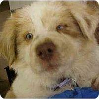 Adopt A Pet :: Teagan - Mesa, AZ