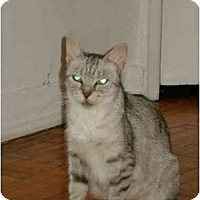Adopt A Pet :: Sweetie - Etobicoke, ON