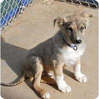 Adopt A Pet :: Jackson - dewey, AZ