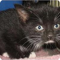 Adopt A Pet :: Gibbs - Acme, PA