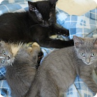 Adopt A Pet :: Two-For-One Kitten Special! - Richmond, VA