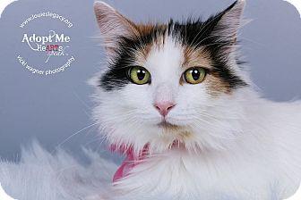Calico Cat for adoption in Cincinnati, Ohio - Sister- WAIVED FEE