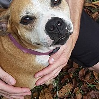 Adopt A Pet :: Matti - Charlotte, NC