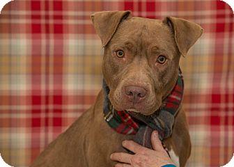Terrier (Unknown Type, Medium) Mix Dog for adoption in Flint, Michigan - Rusty