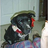Adopt A Pet :: Maggie Mae - Longs, SC
