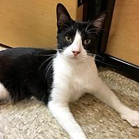 Adopt A Pet :: Kiki - Fort Worth, TX