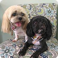 Adopt A Pet :: Amber & Princess - Lawrenceville, GA