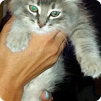 Adopt A Pet :: Bugsy - temecula, CA