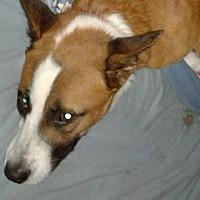 Adopt A Pet :: Jesse - Surprise, AZ